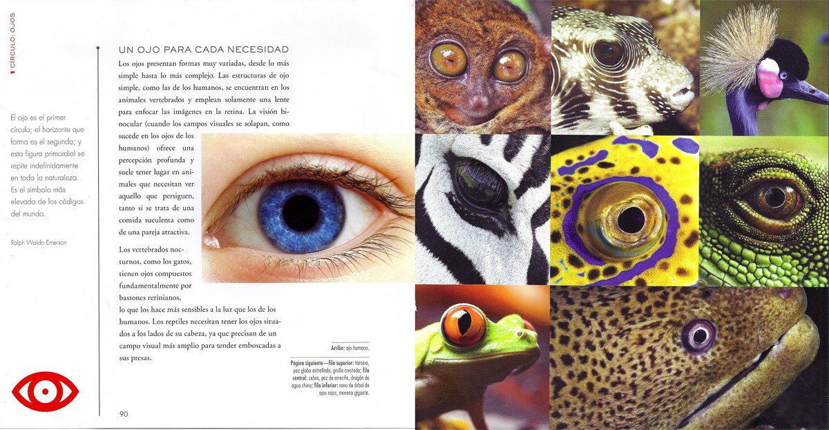 Interior - El libro de los mandalas